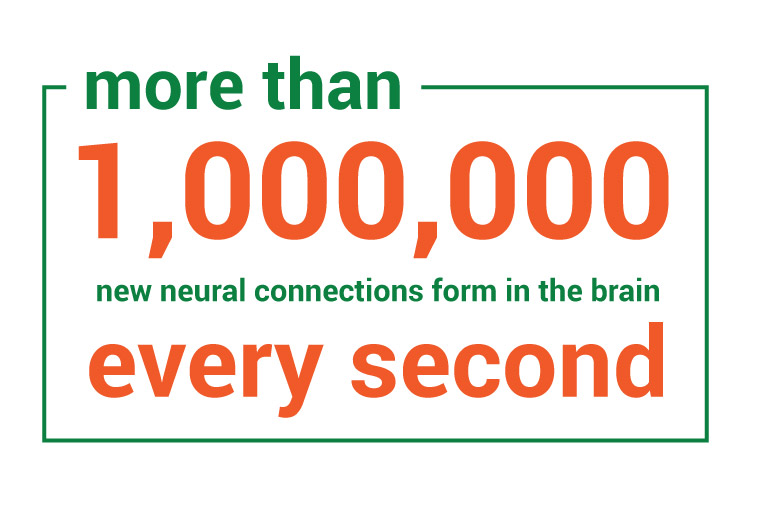 More than 1 million new neural connections form in the brain every second during early childhood